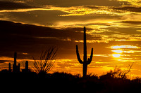 Saguaro Cactus-Desert Landscape at Sunset.